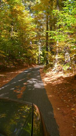 开车山林中