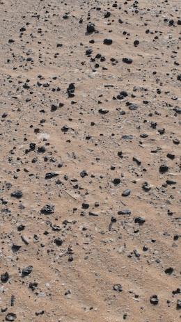 遍地小化石